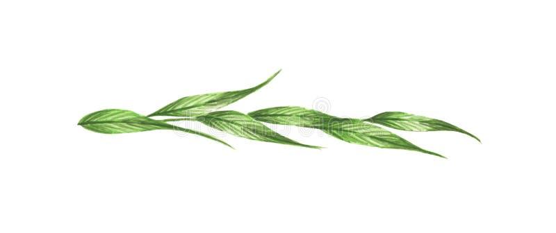 Πράσινοι φύλλα και κλάδοι Σύνορα γραμμών, laurels και διαιρέτης κειμένων διανυσματική απεικόνιση