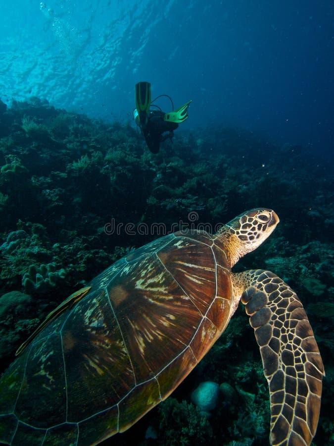 Πράσινοι χελώνα & δύτης στοκ φωτογραφίες με δικαίωμα ελεύθερης χρήσης