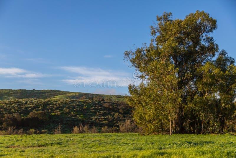 Πράσινοι λόφοι μετά από τη βροχή στοκ φωτογραφίες