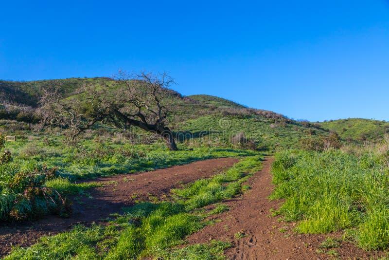 Πράσινοι λόφοι μετά από τη βροχή στοκ εικόνα με δικαίωμα ελεύθερης χρήσης