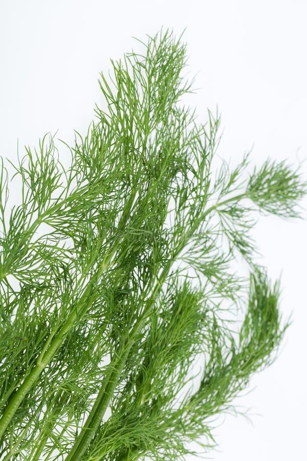 Πράσινος άνηθος στοκ εικόνα