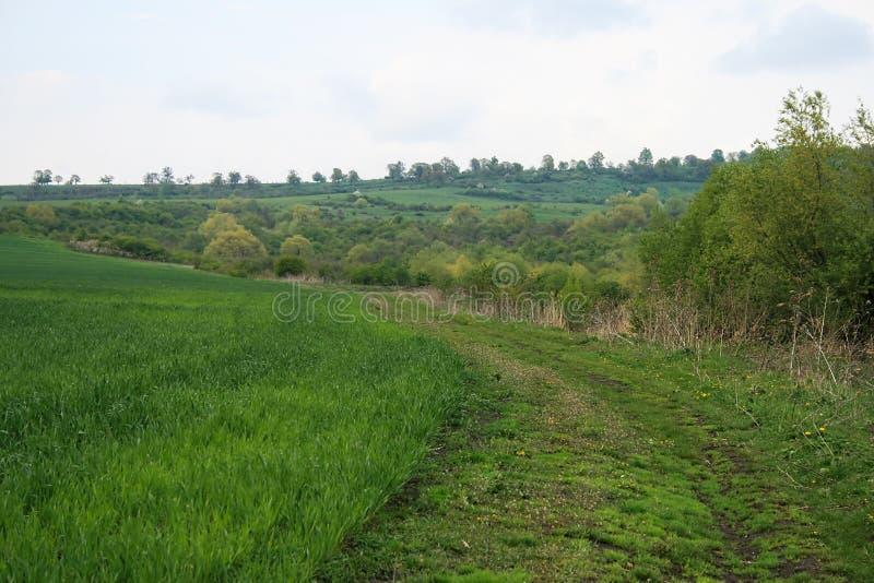 πράσινος ανοικτός δρόμος πεδίων στοκ φωτογραφία