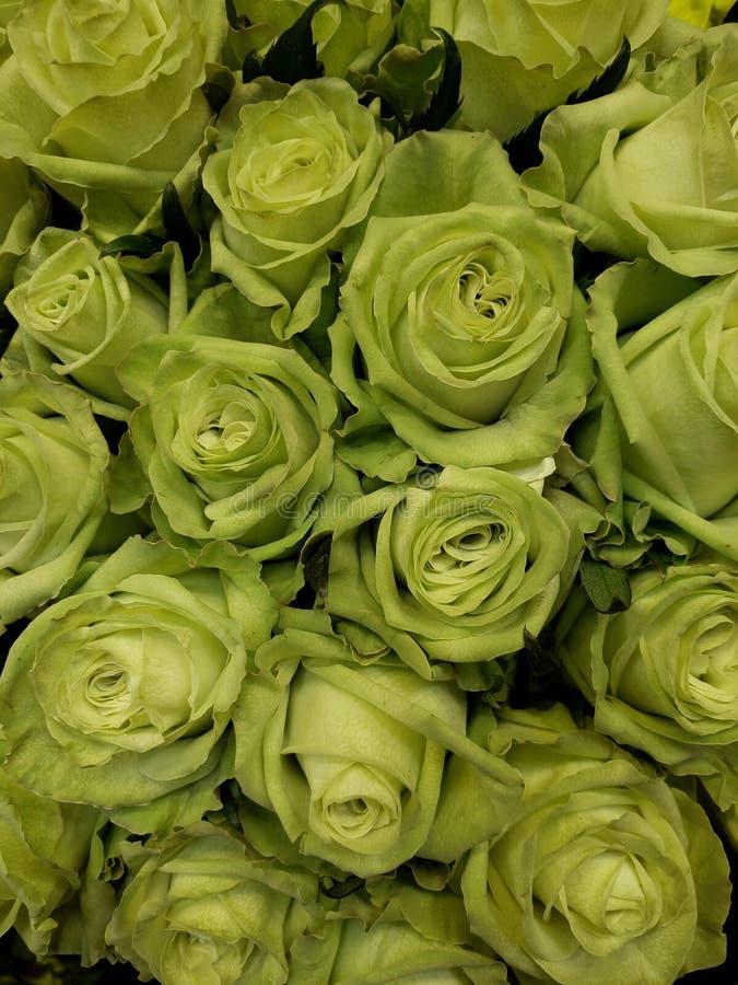 πράσινος αυξήθηκε λουλούδια σε μια floral ανθοδέσμη, ένα υπόβαθρο και μια σύσταση στοκ εικόνες με δικαίωμα ελεύθερης χρήσης