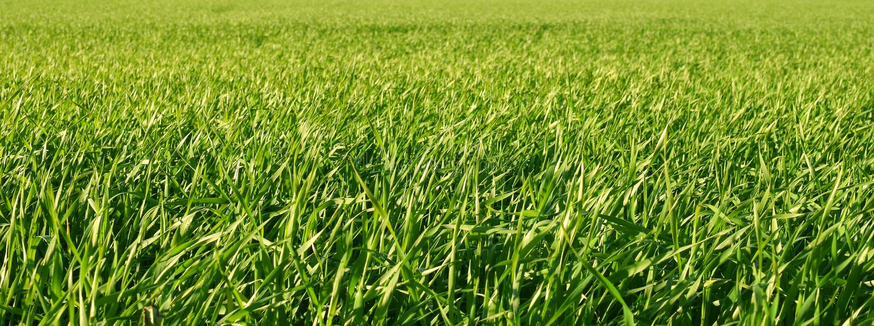 Πράσινος αυξανόμενος τομέας στοκ εικόνες