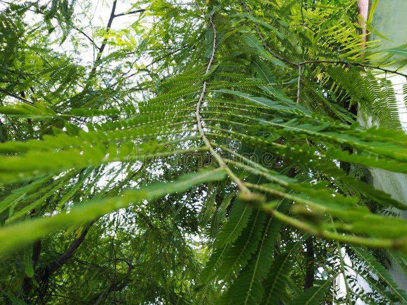 Πράσινος βγάζει φύλλα στη φύση σχεδίων όμορφη στοκ φωτογραφία