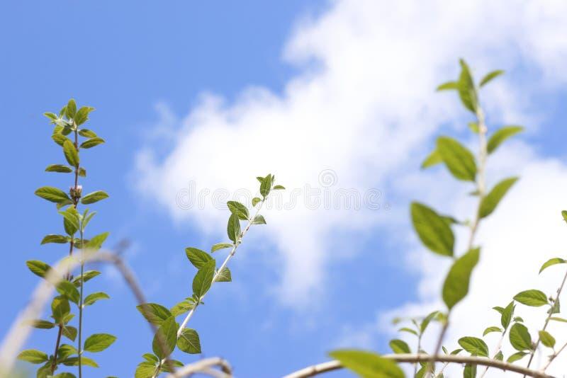 Πράσινος βγάζει φύλλα, folhas verdes τροπικά στοκ εικόνα