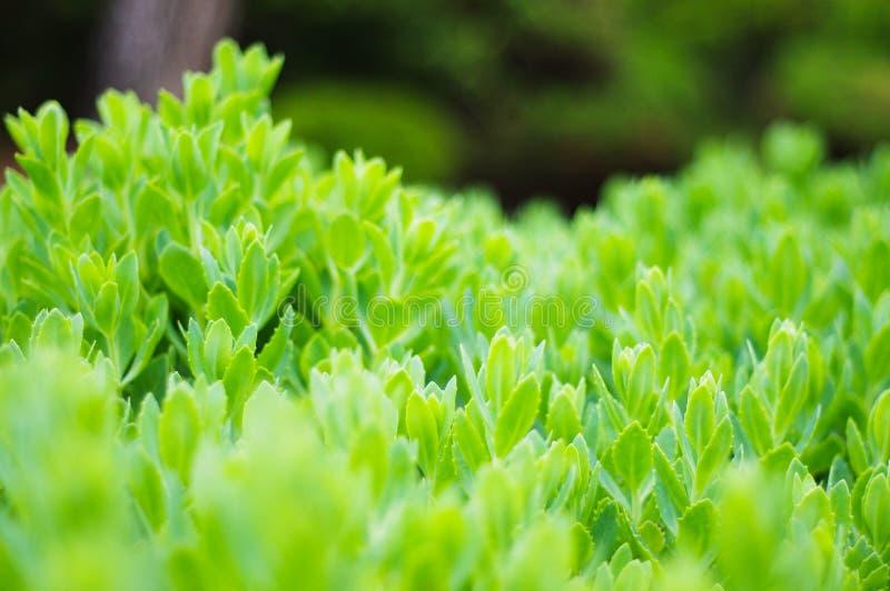 Πράσινος βλαστός, φυσικό οικολογικό υπόβαθρο στοκ φωτογραφία
