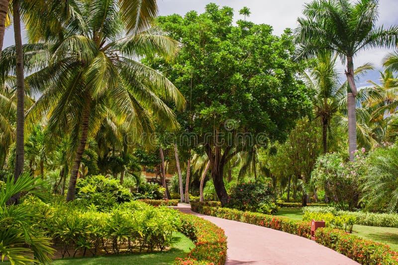 Πράσινος εξωτικός κήπος Δομινικανή Δημοκρατία διάβαση στοκ εικόνες