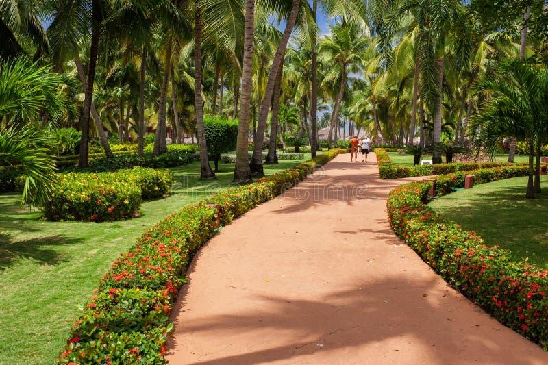 Πράσινος εξωτικός κήπος Δομινικανή Δημοκρατία διάβαση στοκ φωτογραφίες με δικαίωμα ελεύθερης χρήσης