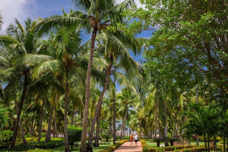 Πράσινος εξωτικός κήπος Δομινικανή Δημοκρατία διάβαση στοκ φωτογραφία με δικαίωμα ελεύθερης χρήσης