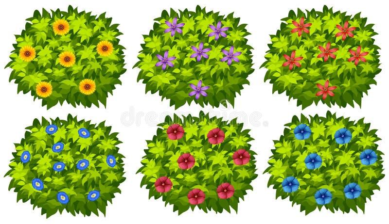 Πράσινος θάμνος με τα ζωηρόχρωμα λουλούδια απεικόνιση αποθεμάτων
