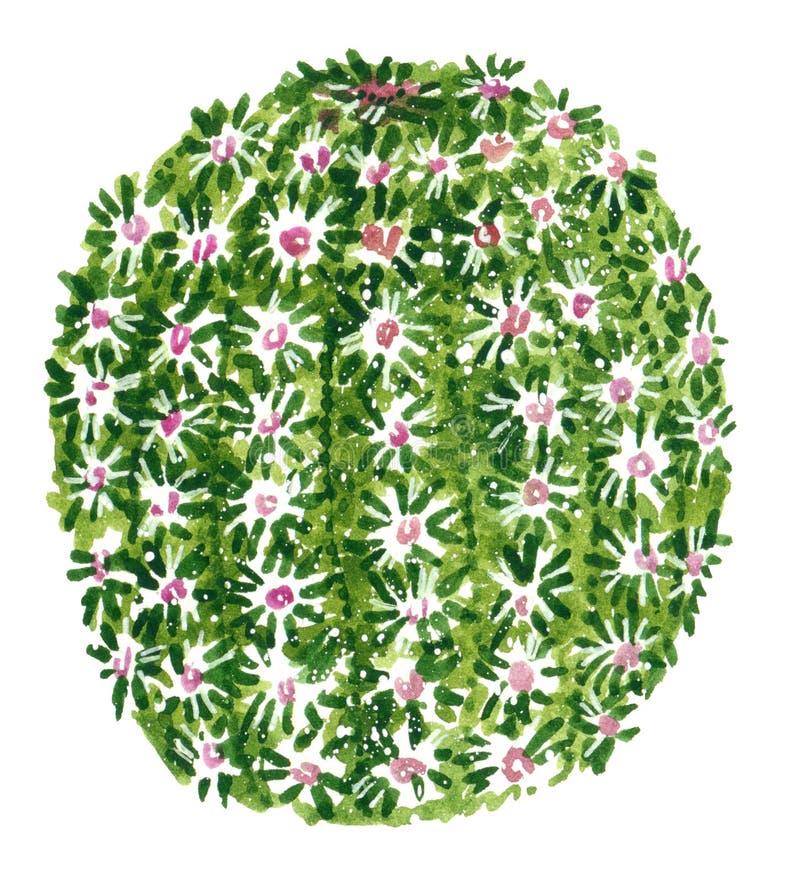 Πράσινος κάκτος με τα λουλούδια και τις σπονδυλικές στήλες, συρμένη χέρι απεικόνιση watercolor απεικόνιση αποθεμάτων