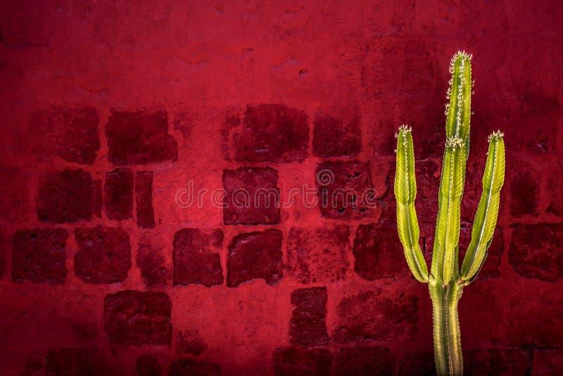 Πράσινος κάκτος πέρα από τον κόκκινο κατασκευασμένο τοίχο στοκ φωτογραφία με δικαίωμα ελεύθερης χρήσης