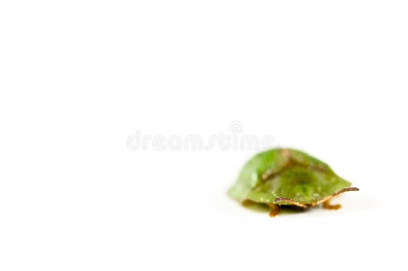 Πράσινος κάνθαρος τεθωρακισμένων που απομονώνεται στο λευκό στοκ φωτογραφία