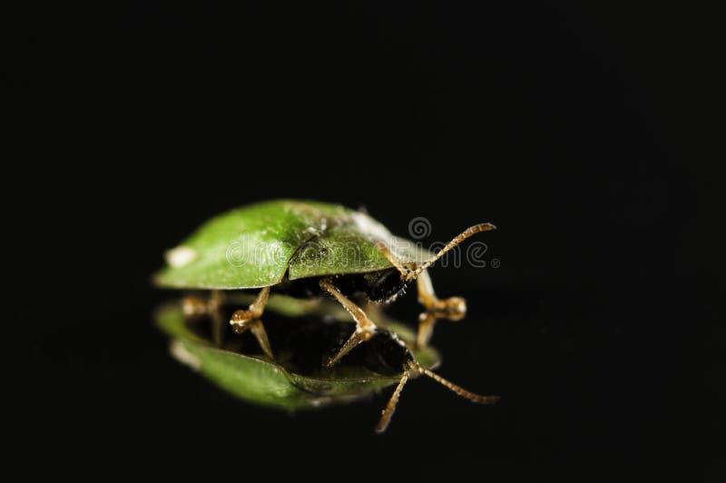 Πράσινος κάνθαρος την αντανάκλαση που απομονώνεται με στο Μαύρο στοκ εικόνα με δικαίωμα ελεύθερης χρήσης