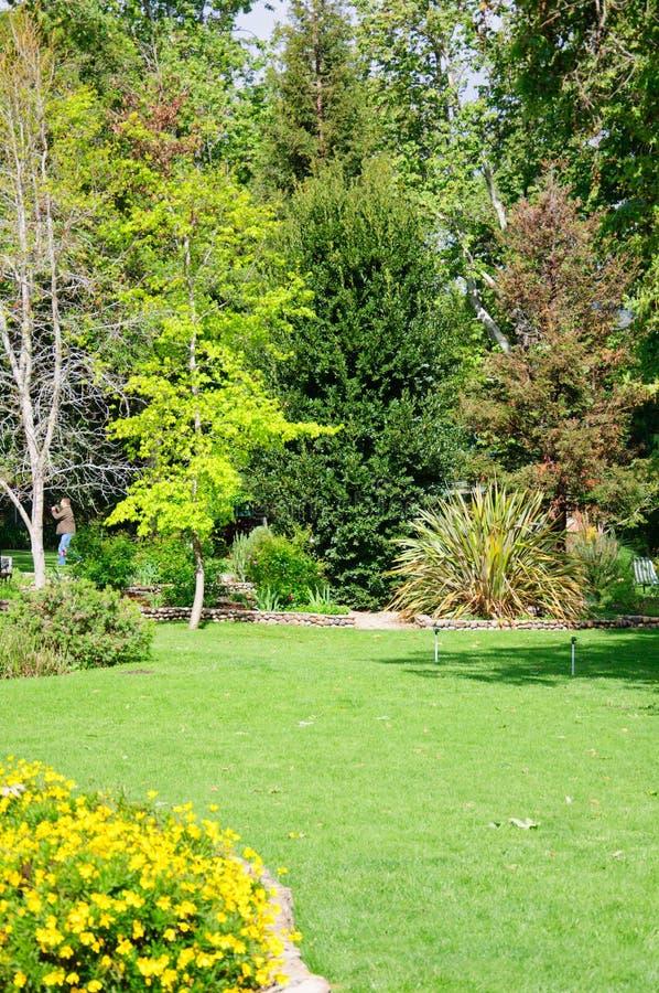 Πράσινος κήπος θερινών κατωφλιών με τη χλόη μετά από τη βροχή και τον ήλιο στοκ φωτογραφίες με δικαίωμα ελεύθερης χρήσης