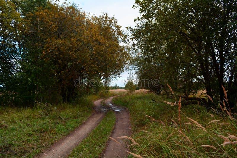 πράσινος καιρός δέντρων οδικών ήλιων φθινοπώρου κίτρινος στοκ εικόνα με δικαίωμα ελεύθερης χρήσης