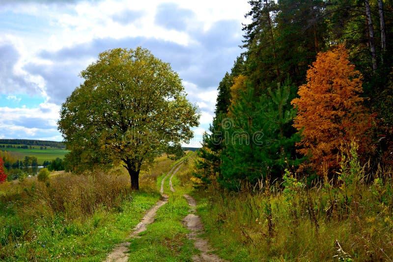 πράσινος καιρός δέντρων οδικών ήλιων φθινοπώρου κίτρινος στοκ φωτογραφίες
