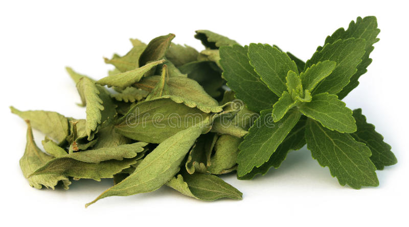 Πράσινος και τα φύλλα Stevia στοκ φωτογραφία με δικαίωμα ελεύθερης χρήσης