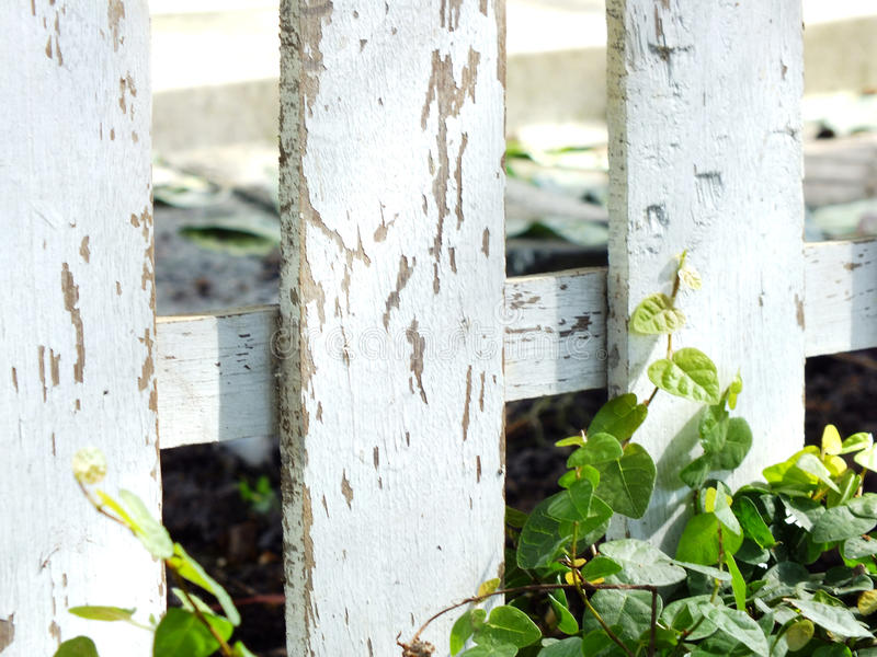 Πράσινος κισσός και ξύλινο υπόβαθρο φύσης σύστασης στοκ εικόνα με δικαίωμα ελεύθερης χρήσης