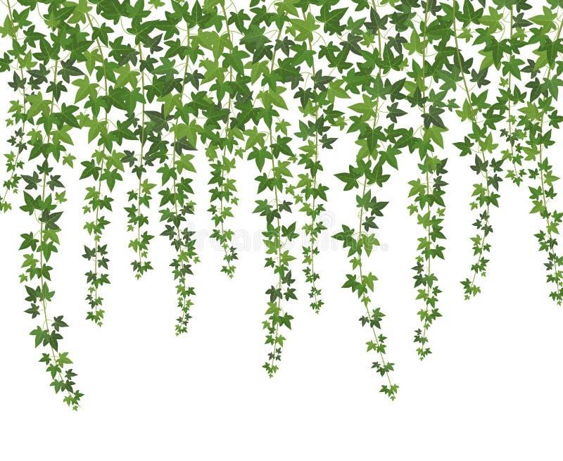 πράσινος κισσός Τοίχος αναρριχητικών φυτών που αναρριχείται στις εγκαταστάσεις που κρεμούν άνωθεν Υπόβαθρο αμπέλων κισσών διακοσμ διανυσματική απεικόνιση