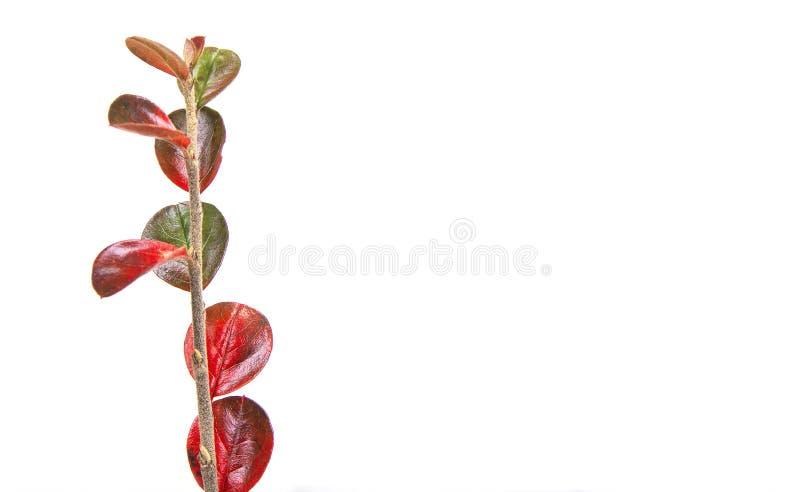 Πράσινος κλάδος με την επιλογή φύλλων από το λιβάδι το φθινόπωρο Σκηνή φθινοπώρου στοκ φωτογραφία με δικαίωμα ελεύθερης χρήσης