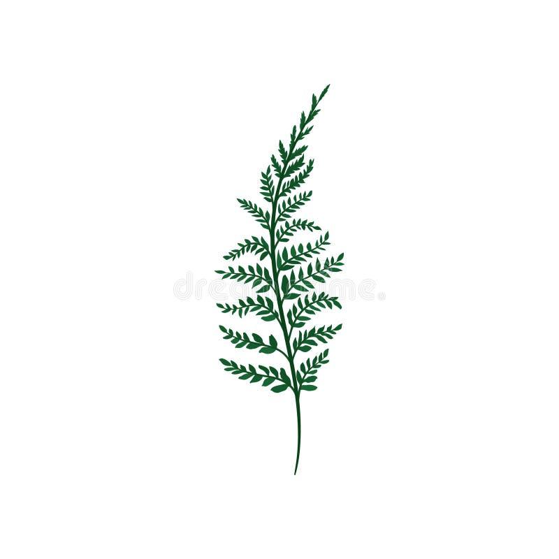 Πράσινος κλαδίσκος φτερών με τα μικρά φύλλα Φυσικό στοιχείο Δασικές εγκαταστάσεις Θέμα φύσης και βοτανικής Επίπεδο διανυσματικό ε διανυσματική απεικόνιση
