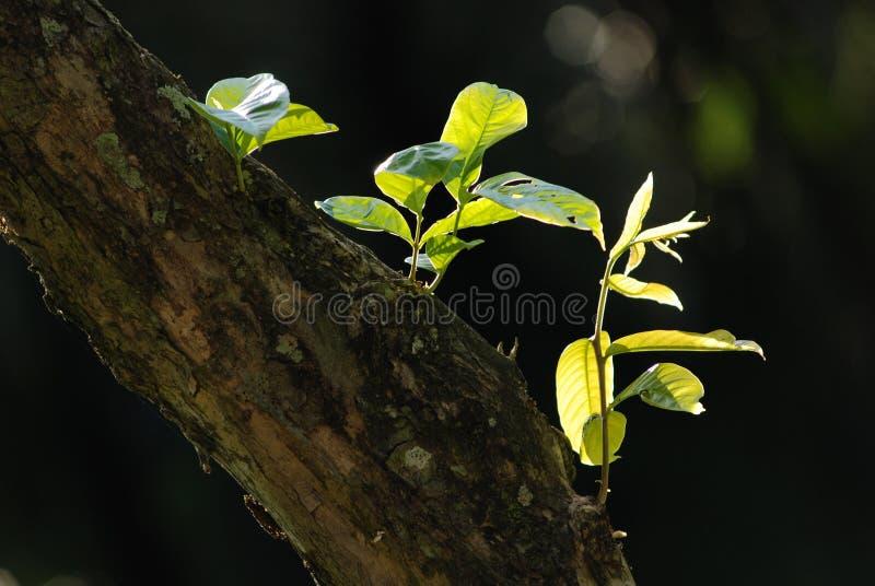 πράσινος κορμός δέντρων φύλ&l στοκ φωτογραφία με δικαίωμα ελεύθερης χρήσης