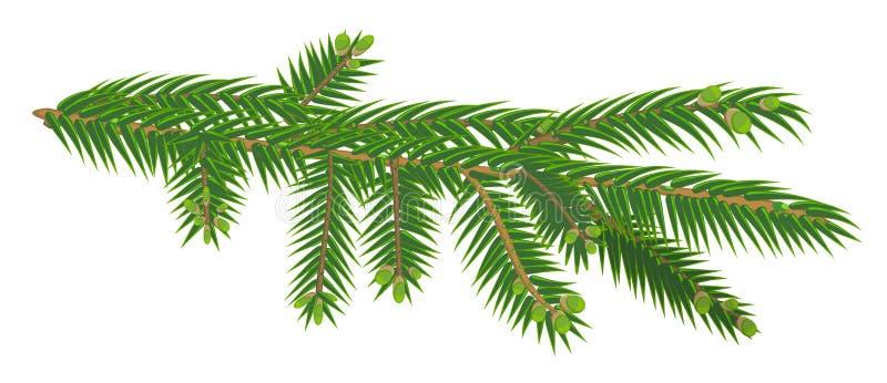 Πράσινος κλάδος του δέντρου έλατου που απομονώνεται στο άσπρο υπόβαθρο ελεύθερη απεικόνιση δικαιώματος