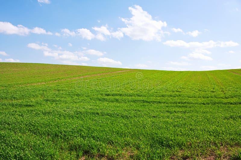 πράσινος λόφος ηλιόλουσ στοκ φωτογραφία με δικαίωμα ελεύθερης χρήσης