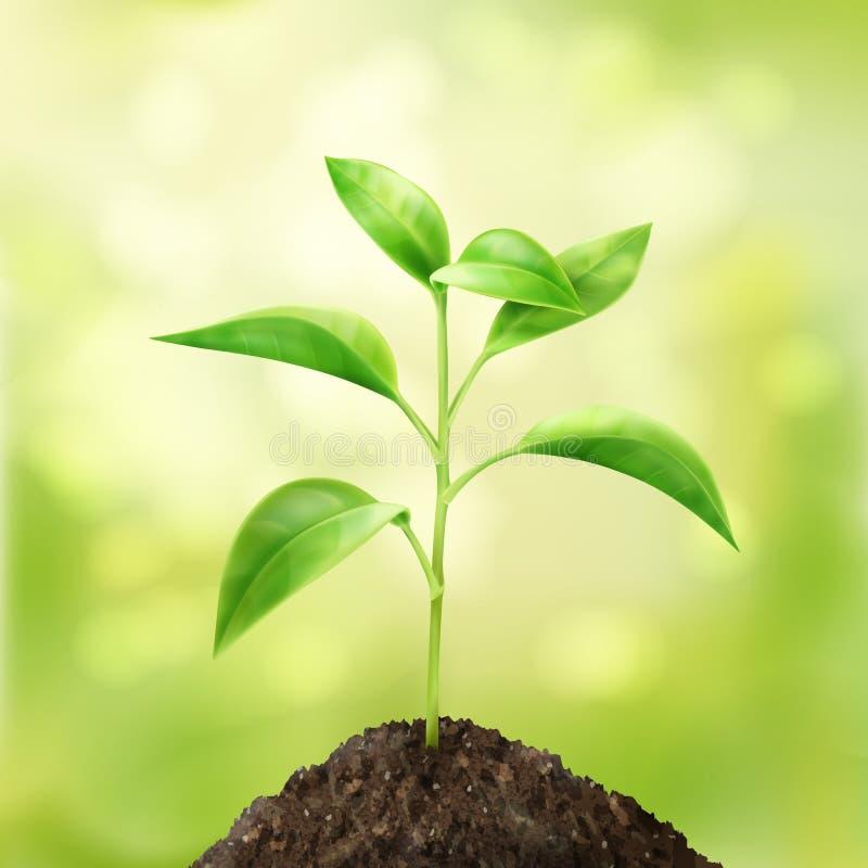 πράσινος μικρός νεαρός βλ&alp διανυσματική απεικόνιση