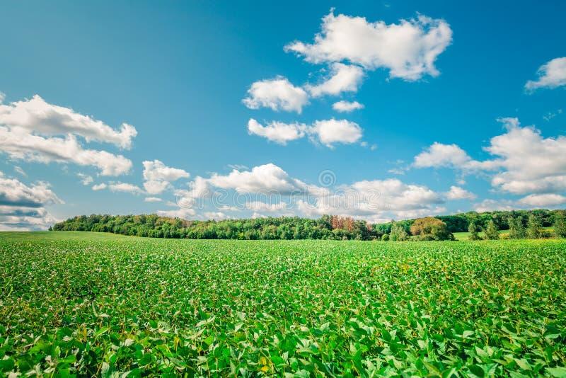 Πράσινος μπλε ουρανός πεδίων στοκ φωτογραφίες με δικαίωμα ελεύθερης χρήσης