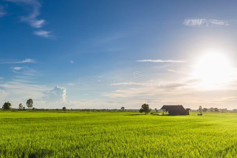 Πράσινος μπλε ουρανός πεδίων στοκ φωτογραφία με δικαίωμα ελεύθερης χρήσης