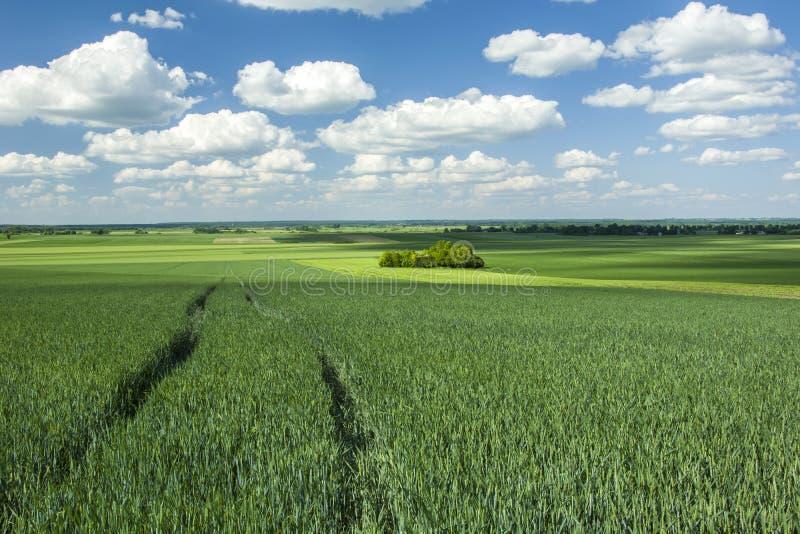 Πράσινος νέος σίτος τομέων, copses και σύννεφα στον ουρανό στοκ φωτογραφία με δικαίωμα ελεύθερης χρήσης