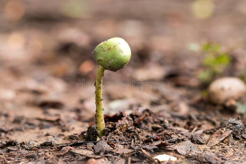 πράσινος να αναπτύξει νεαρ στοκ εικόνες