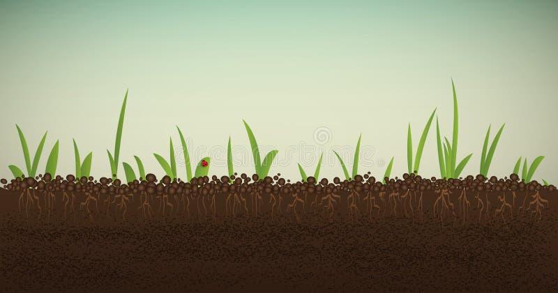 Πράσινος νεαρός βλαστός άνοιξη με τις ρίζες απεικόνιση αποθεμάτων