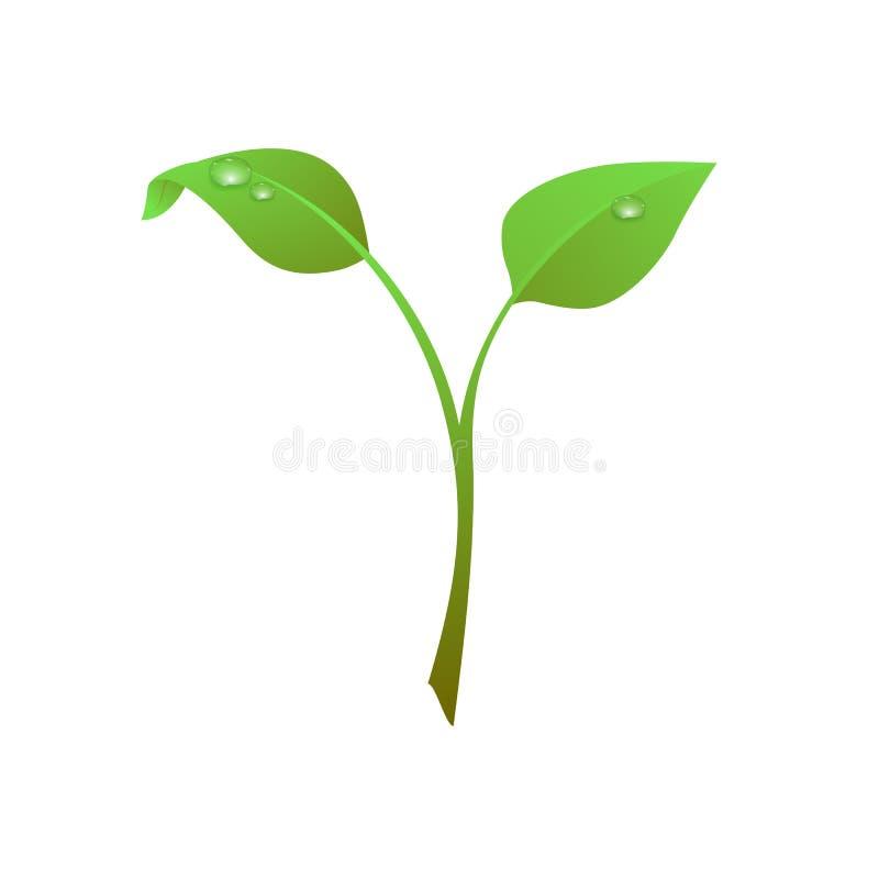 Πράσινος νεαρός βλαστός με τη δροσιά, φύλλα που απομονώνονται στο άσπρο υπόβαθρο ελεύθερη απεικόνιση δικαιώματος