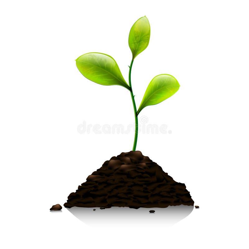 Πράσινος νεαρός βλαστός διανυσματική απεικόνιση