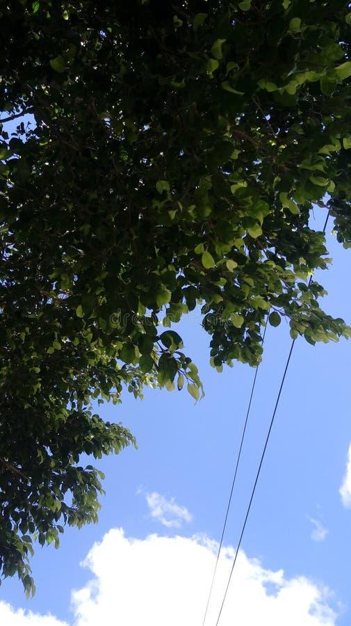 Πράσινος ουρανός ημέρας σύννεφων φύσης δέντρων στοκ εικόνες με δικαίωμα ελεύθερης χρήσης