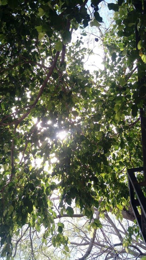 Πράσινος ουρανός ημέρας σύννεφων φύσης δέντρων στοκ φωτογραφίες