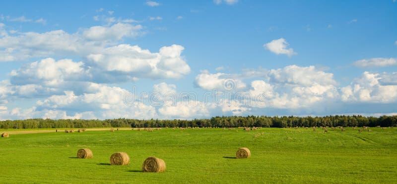 πράσινος πανοραμικός πεδί& στοκ φωτογραφία με δικαίωμα ελεύθερης χρήσης