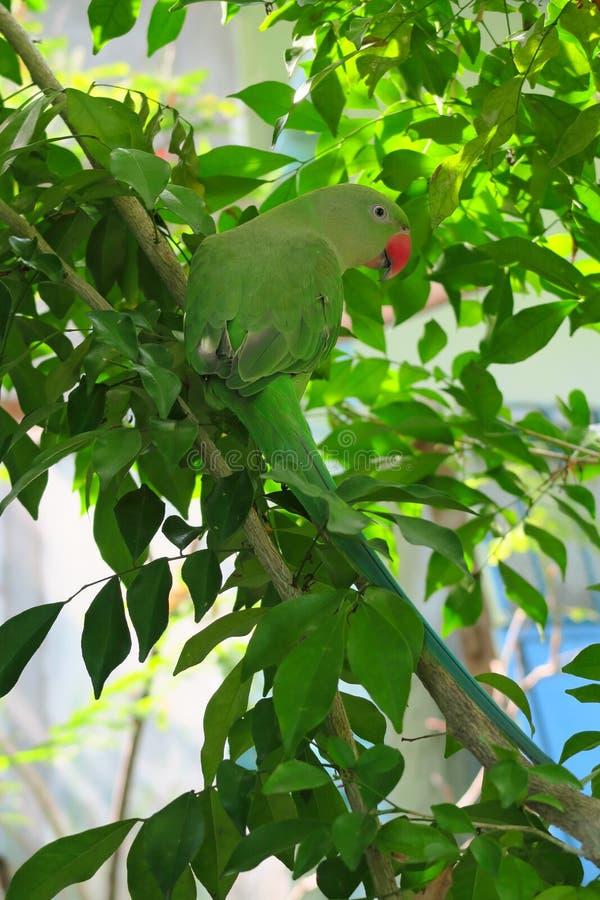 Πράσινος παπαγάλος στον κλάδο του πράσινου δέντρου στοκ φωτογραφία με δικαίωμα ελεύθερης χρήσης