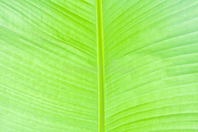 πράσινος πολύβλαστος φ&omicro στοκ φωτογραφίες με δικαίωμα ελεύθερης χρήσης