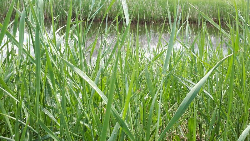 πράσινος ποταμός λιμνών χλόης στοκ φωτογραφίες με δικαίωμα ελεύθερης χρήσης