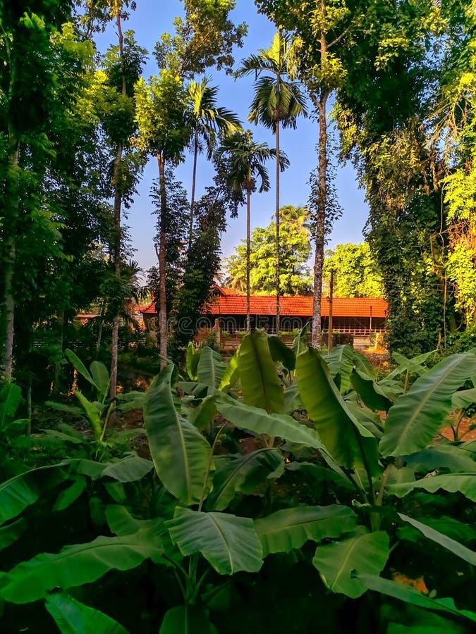 Πράσινος που ευλογείται από τον ήλιο στοκ εικόνες με δικαίωμα ελεύθερης χρήσης