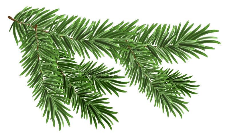 Πράσινος πολύβλαστος κομψός κλάδος Κλάδοι του FIR ελεύθερη απεικόνιση δικαιώματος