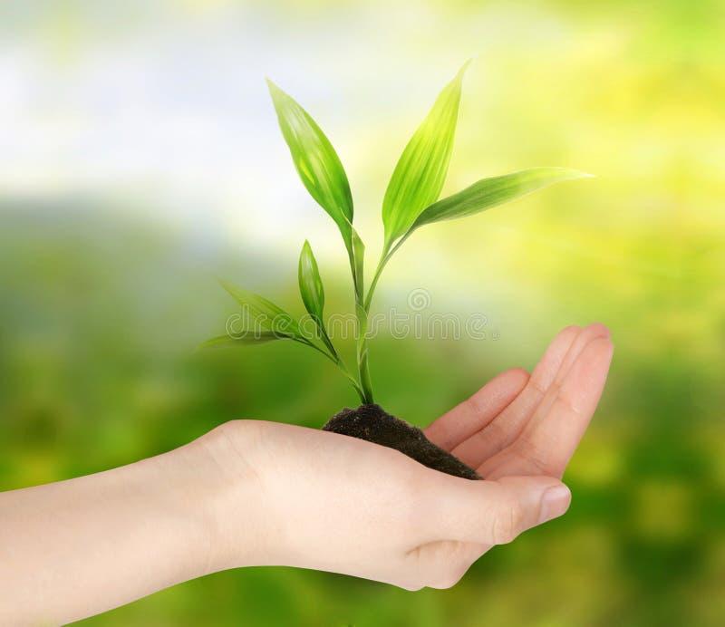 πράσινος σκεφτείτε εικόνες οικολογίας έννοιας πολύ περισσότεροι το χαρτοφυλάκιό μου στοκ εικόνα