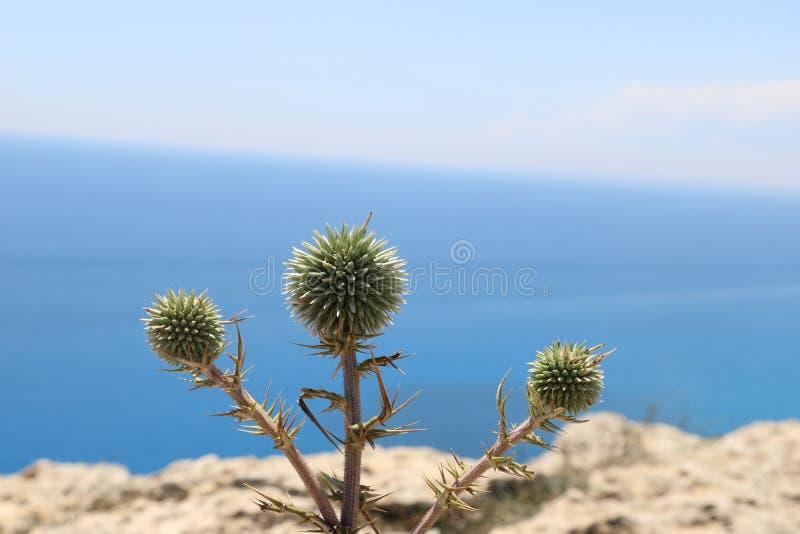Πράσινος στην όμορφη Κύπρο στοκ εικόνες