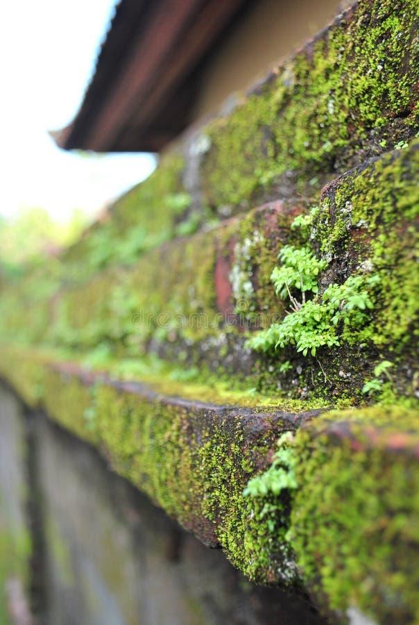 Πράσινος στον τοίχο στοκ εικόνες με δικαίωμα ελεύθερης χρήσης