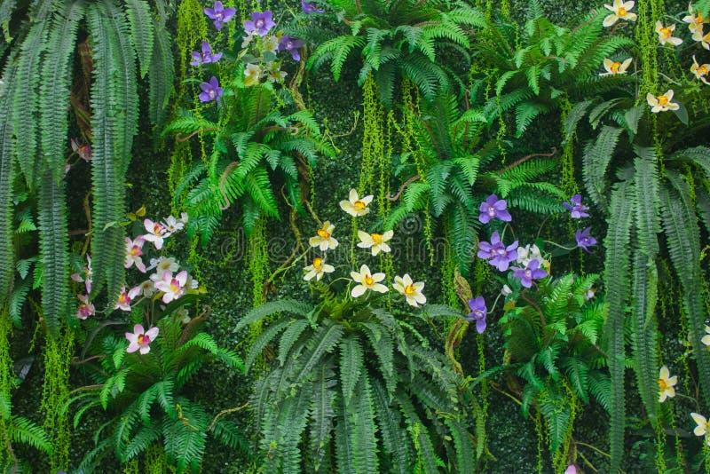 Πράσινος τοίχος φτερών με το υπόβαθρο λουλουδιών στοκ φωτογραφία με δικαίωμα ελεύθερης χρήσης